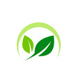 green leaf organic nature logo vector image vector image