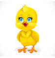 cute little bachick isolated on a white vector image vector image