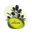 black olive branches banner design for olive oil vector image vector image