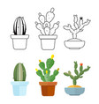 cartoon and outline cactus set icons vector image