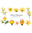 floral elements collection with different species vector image vector image