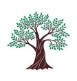 tree green drawing oak graphics environment vector image vector image