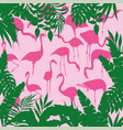 tropical background squared flamingo vector image