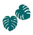 two leaf monster tropical decor botanical design vector image vector image