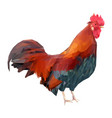 bright colorful rooster on a white background red vector image