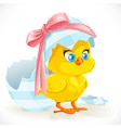 cute little yellow cartoon chicken just hatched vector image vector image