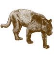engraving black panther vector image