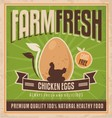 Farm fresh chicken eggs vector image vector image
