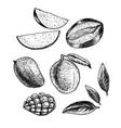 hand drawn set of mango vintage sketch vector image vector image
