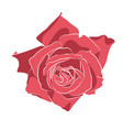 beautiful hand drawn stencil rose isolated on vector image vector image