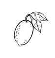 monochrome lemon logo design for holiday vector image vector image