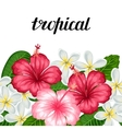 Seamless border with tropical flowers hibiscus and vector image vector image