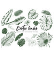 tropical leaves collection isolated elements on vector image vector image