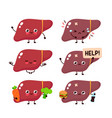 human liver organ set collection vector image vector image