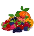 Juicy Summer Fruits and Berries vector image vector image