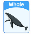 educational english word card whale vector image