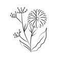 minimalist tattoo flower fruits botancial line art vector image vector image