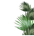 realistic an palm leaves isolated vector image