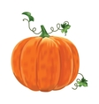 Pumpkin with leaves on a white background vector image