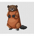 beaver on transparent background vector image vector image