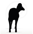 big horn sheep silhouette in twist head pose vector image vector image