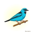 Blue dacnis bird educational game vector image vector image