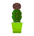cactus in green flower pot vector image vector image