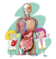 Doctors and human anatomy model vector image vector image