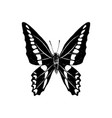hand drawn graphium sarpedon butterfly vector image vector image