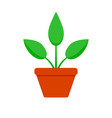 home plant with green leaf vector image