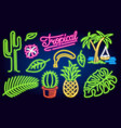 Set of neon signs and icons cactus and pineapple