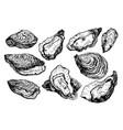 set oyster shells vector image