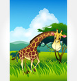 Wild animal set 31 of 32 - giraffe vector