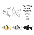 barbus fish icon cartoon singe aquarium fish icon vector image vector image