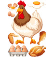 Chicken and chicken products vector image vector image