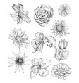 hand drawing flowers set vector image