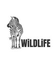 hand drawn zebra with wildlife text isolated on a vector image