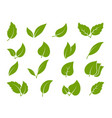 leaves icons young green leaves trees and vector image vector image