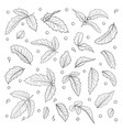 set isolated black and white holly ilex branch vector image