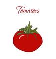 tasty veggies tomatoes vector image vector image