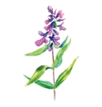 Lilac flower floral vector image