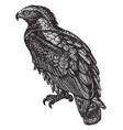 golden eagle vintage vector image vector image