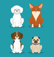 group of dogs breds pets friendly vector image