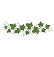 ivy branch icon green climbing garden frame vector image vector image