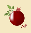 Pomegranate Fruit Icon vector image vector image