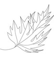 autumn fallen maple leaf vector image