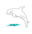 killer whale orca vector image