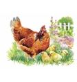 Watercolor Hen and chicks in yard vector image