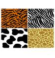 Tiger zebra cow and giraffe print