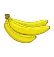 banana hand drawn colored sketch vector image vector image